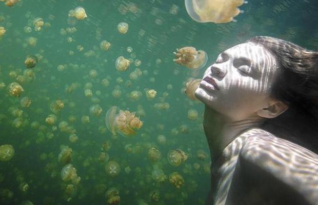 Cinco-millones-de-medusas_buena