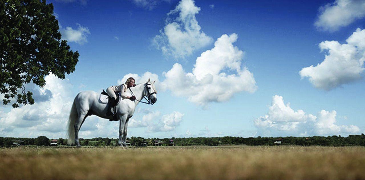 CDC_Equestrian_730x360_1
