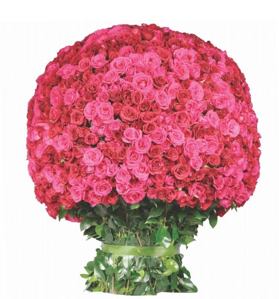 Arreglo Grandeza de Las Rosas de Aurelia