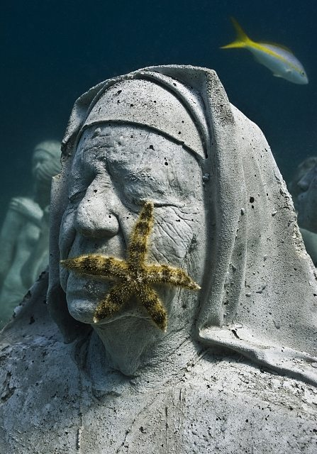 Cómo las especies se van adaptando a las esculturas.