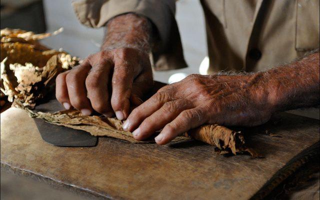 Proceso de envoltura del habano