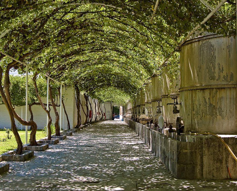 Casa Madero vino mexicano