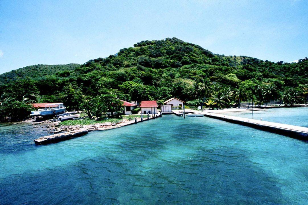 bo-bushs-isla-guanaja