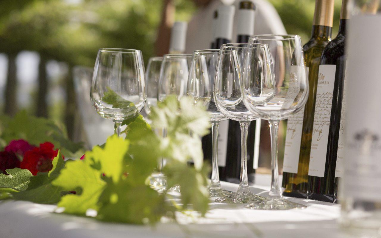 Una vinícola orgánica: la meta de Casa Madero