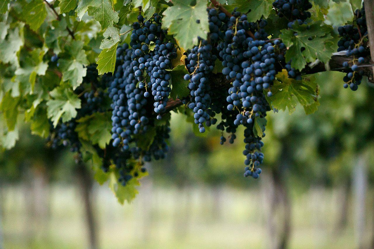 Se anuncia el 2° festival de vinos mexicanos