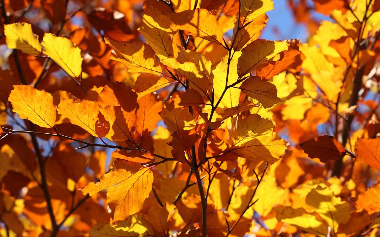 Placeres de otoño